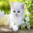 icon com.andromo.dev466877.app428371 1.01